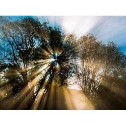 В поисках солнца и правды