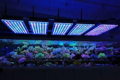Свет в аквариуме