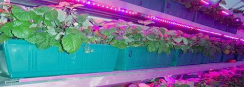 Фитоленты для растений